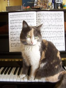 cat-on-piano